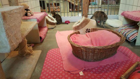 Katten in de roze kamer Kat & Ko
