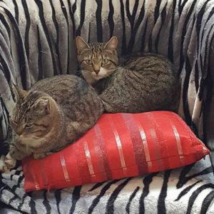 Katten in stoel bij Kattenpension Kat & Ko